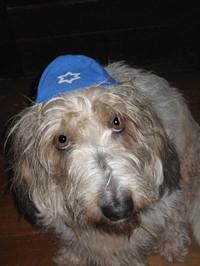 Hanukkah_rita