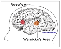 Broca_wernicke_areas