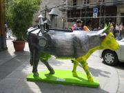 Cow5a